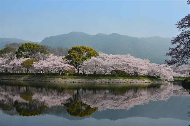 .jpg - 立岡自然公園花見  桜の見ごろはいつ? アクセスは? 駐車場はあるの?