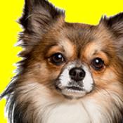 20180307012126 - 2018年最新版 犬のしつけ術「イヌバーシティ」