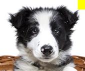20180307011453 - 犬のしつけ教材イヌバーシティの口コミ・評判